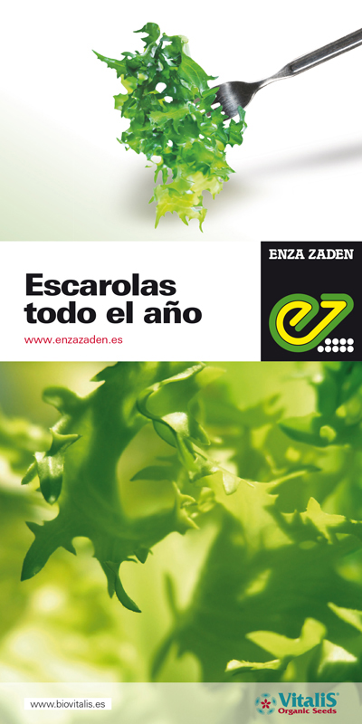 Folleto Escarolas Enza Zaden-2